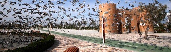 birds_slide